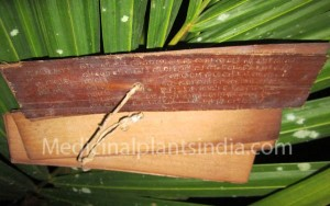 Thaliyola-palm leave old scripts of medicinal plants